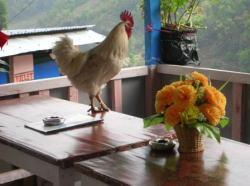Nepali chicken soup