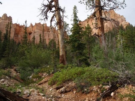Under The Rim Trail Bryce Canyon