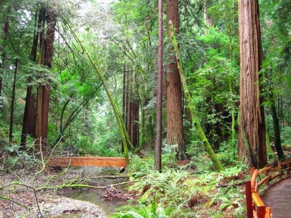 Muir Woods Interpretive Loop