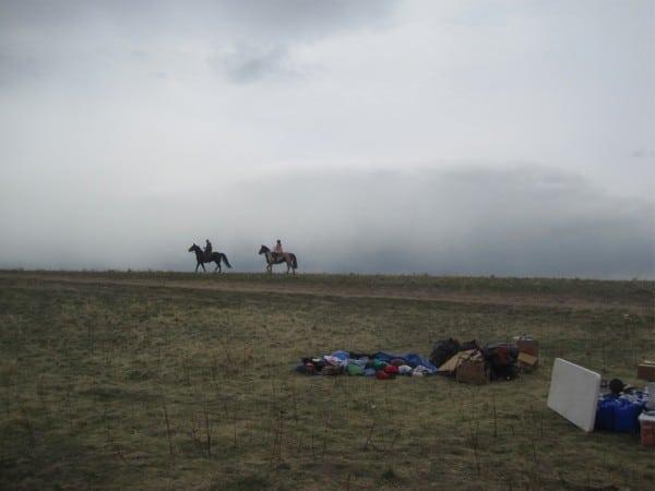 Horses at the Buffalo Run.