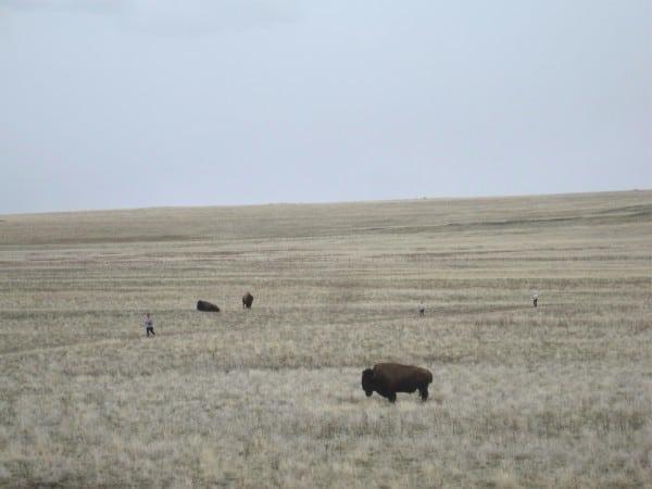 Buffalo Run runners