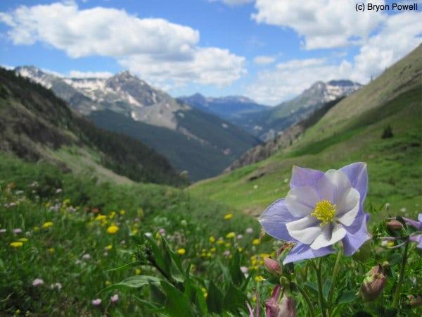 Columbine Boulder Gulch San Juan Mountains