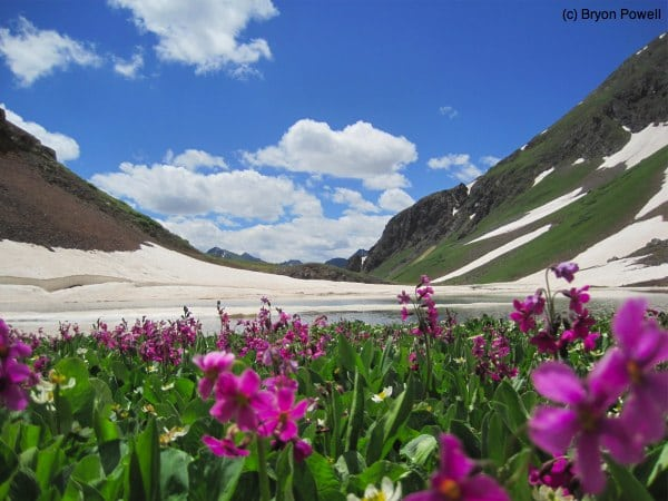 Boulder Gulch lake with wildflowers