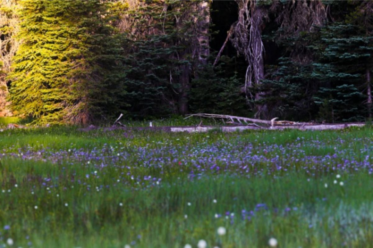 Waldo 100k - Pothole Meadows