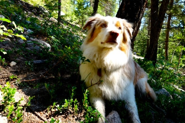 Scott Jaime - 2013 Colorado Trail FKT - Livvy