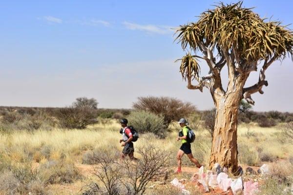Daniel_Rowland_KAEM13_Stage_5_5 - Mahmut Yavuz and Daniel Rowland run past a quiver tree (the icon tree of the Kalahari Desert)