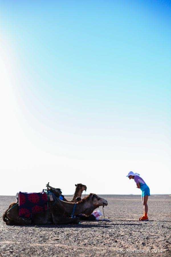 2014 Marathon des Sables - camel and runner