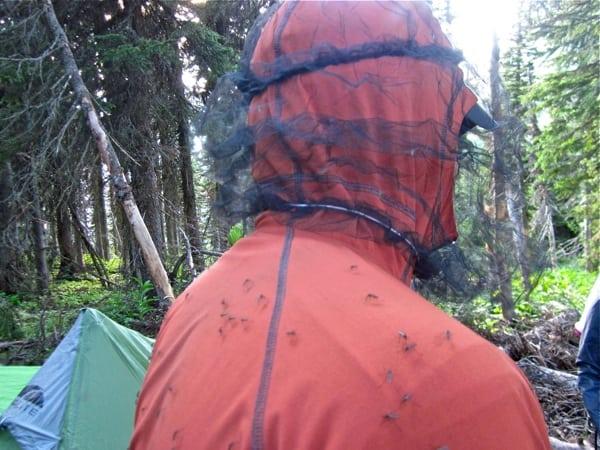 Mosquito Headnet Glacier National Park