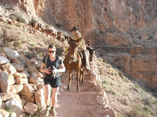 Trail runner after passing mule train Grand Canyon National Park