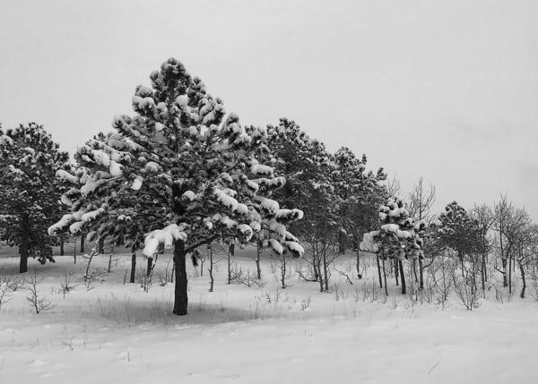 Joe Grant - Winter 6