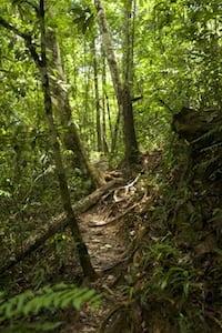 Trail Krabi
