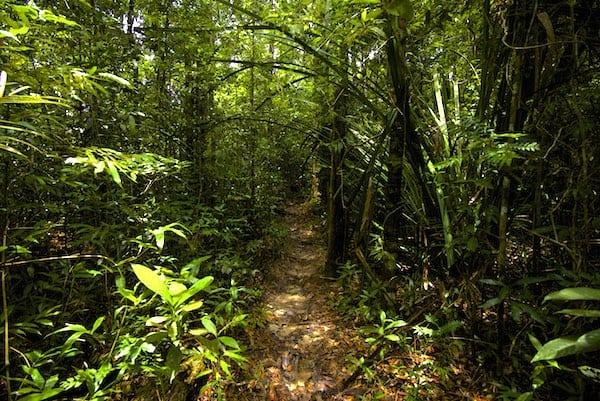 Trail Samui