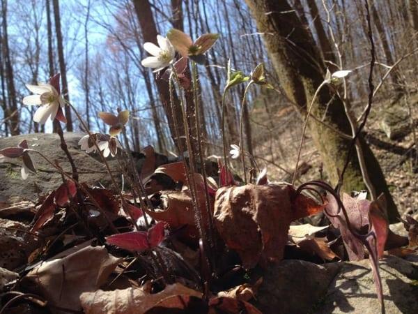 Wildflowers - 2015 Barkley Marathons