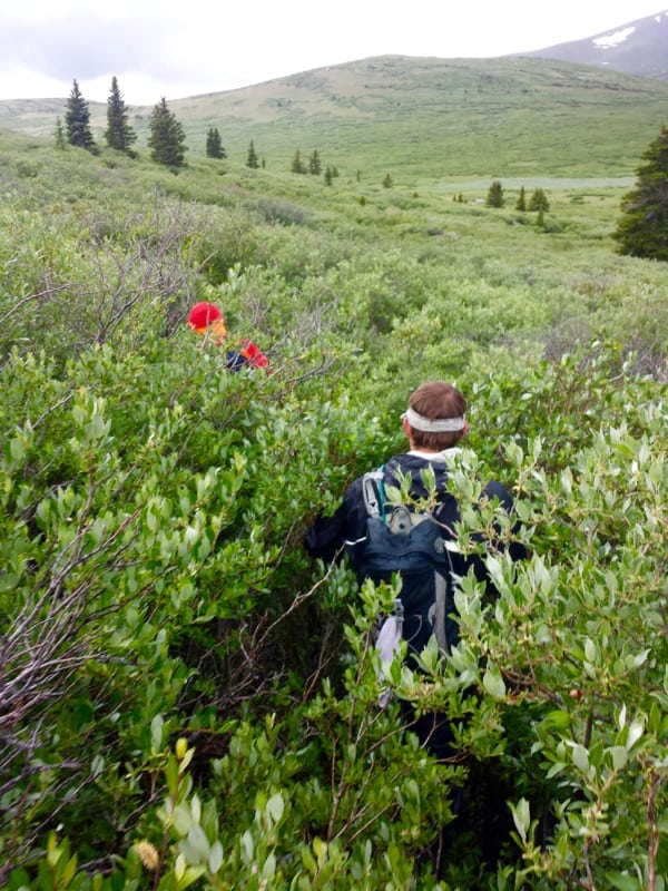 Andrew and Stefan Griebel hiking through willows on Mount Bierstadt (James Sims)