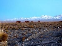 Ultra-Trail Gobi Race 2015: Finding the Spark Within