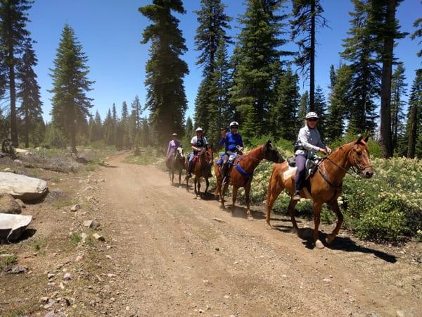 Western States Google Trekker - Horses