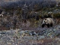 Running With The Bears: A Guide For Trail Runners