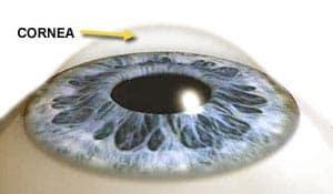 Cornea graphic