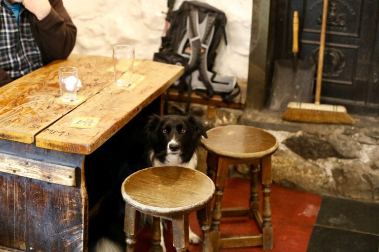 Border Collie in Old Dungeon Ghyll