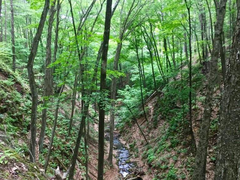 The Sleeping Giants woods