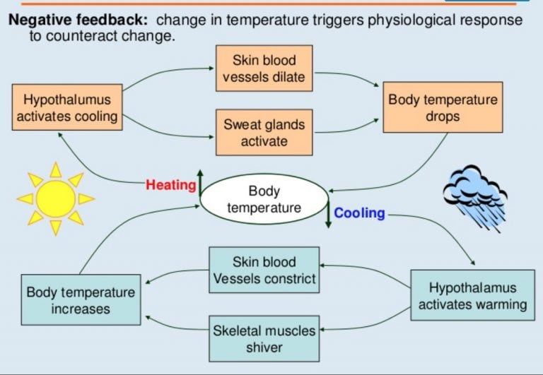 Heat acclimation for endurance running 1