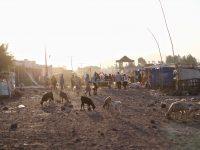 Jaybird Daily Dispatch: Bekoji, Ethiopia