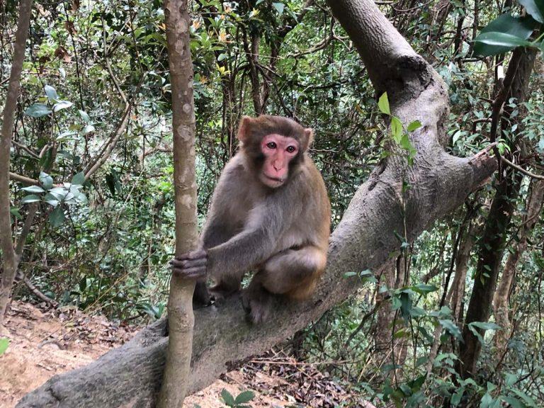 2019 Vibram Hong Kong 100k - Monkey