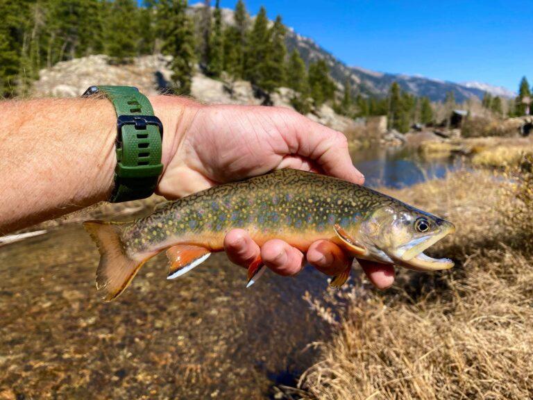 Autumn brook trout - Chalk Creek
