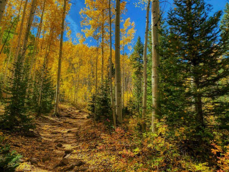 Autumn aspens - Purgatory Flats Trail