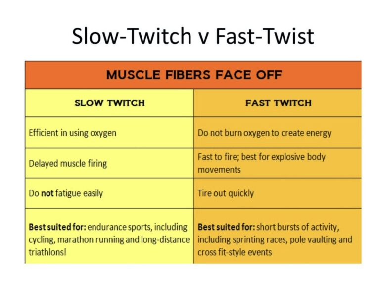 Slow twitch and fast twitch muscles