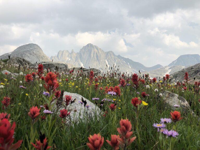 Wind River Range wildflowers