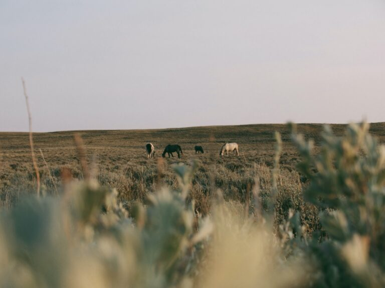 Horses in the Red Desert of Wyoming