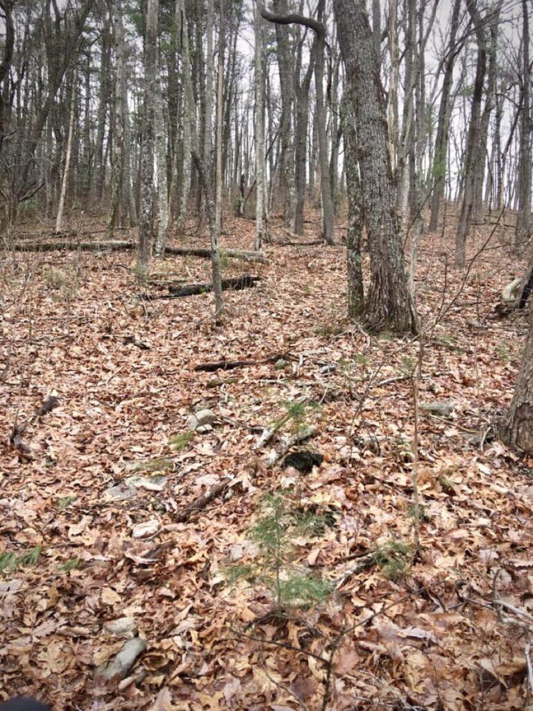 Leaves on the Duncan Ridge Trail