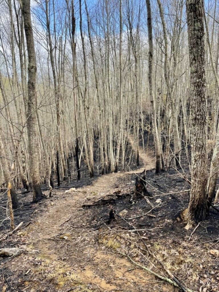 After a fire on the Duncan Ridge Trail