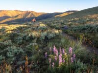 Trail Love Letter: The Continental Divide Trail Between Bannock Pass and Janke Lake