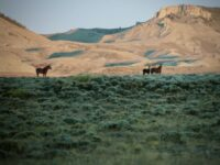 Unfenced: A Race to Keep the Red Desert Wild