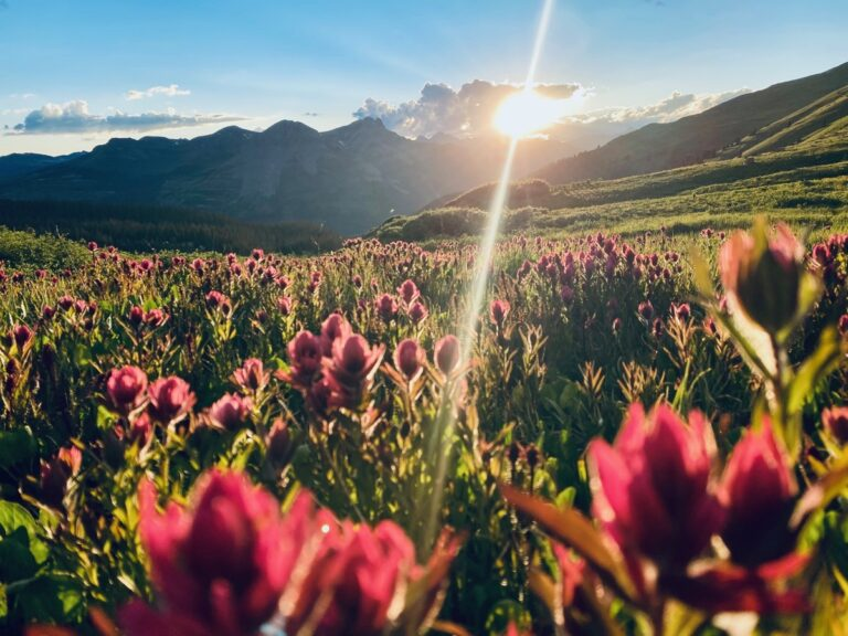 Hannah Green - San Juan Mountains paintbrush wildflowers and sunset