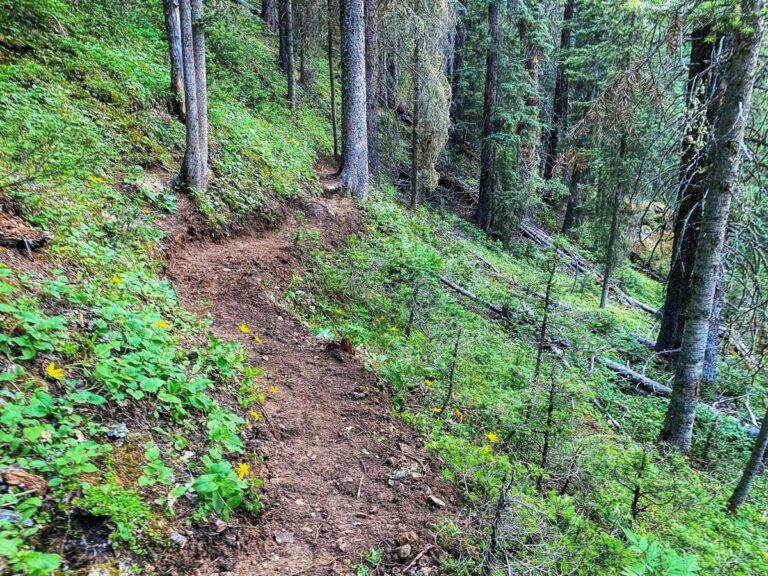 July 2021 Trail Work