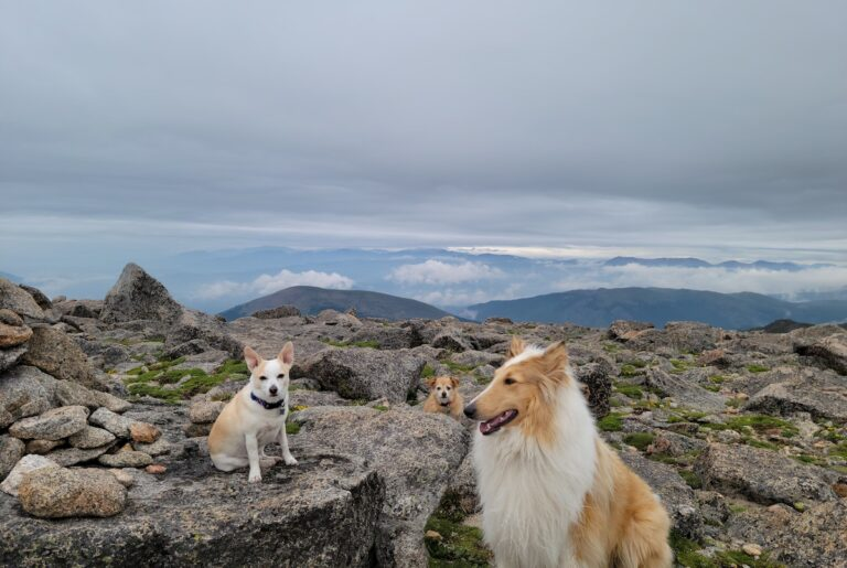 Justin's dogs hiking a big weekend.