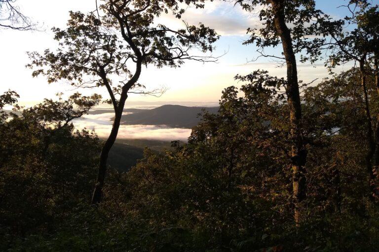 AJW Tap Room Trail Love Letter - Wild Oak Trail