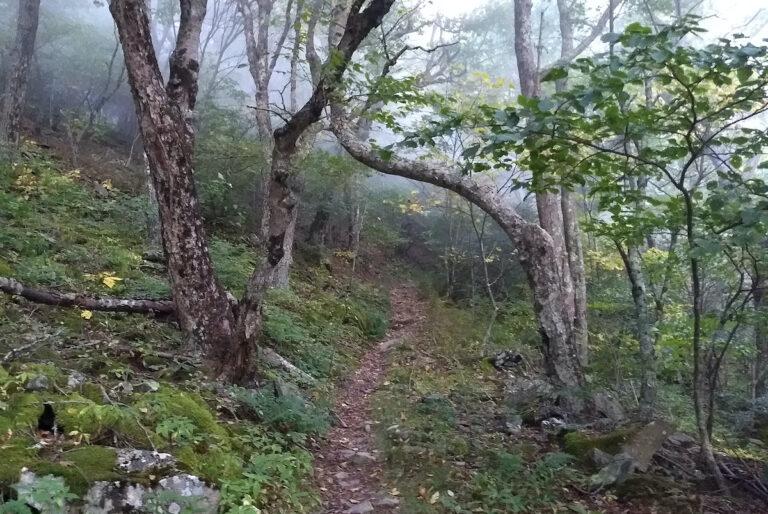 AJW Trail Love Letter - The Wild Oaks Trail