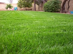 lawn-care-guide-chapter-4-overseeding