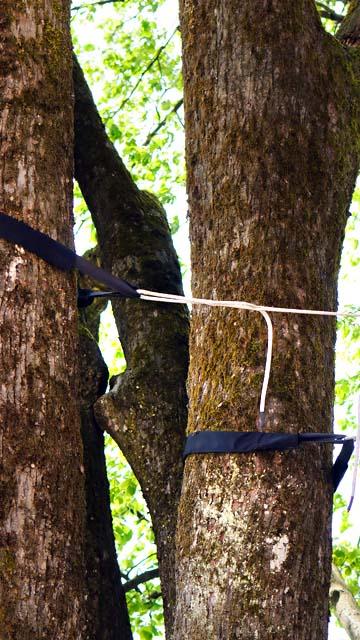 tree-damage-repair