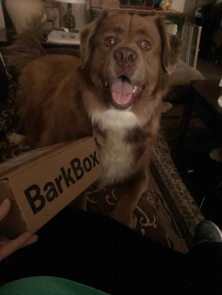 My Bark Box is here!!