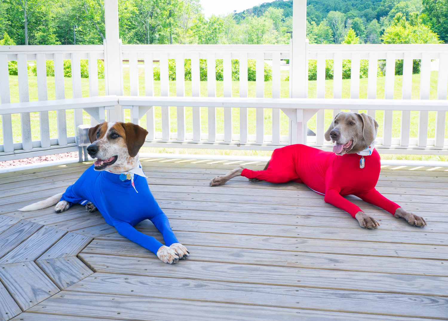 the-shed-defender-70k-per-month-selling-dog-onesies