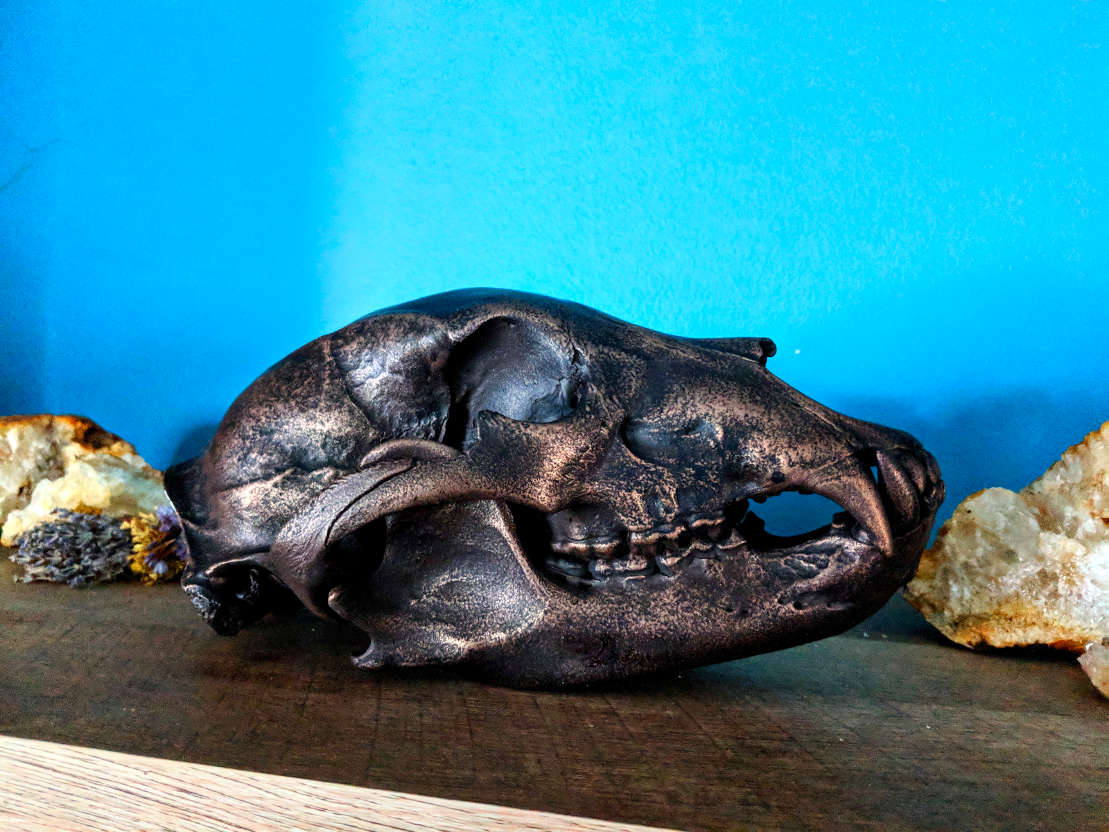 how-i-started-a-successful-side-business-cleaning-animal-skulls