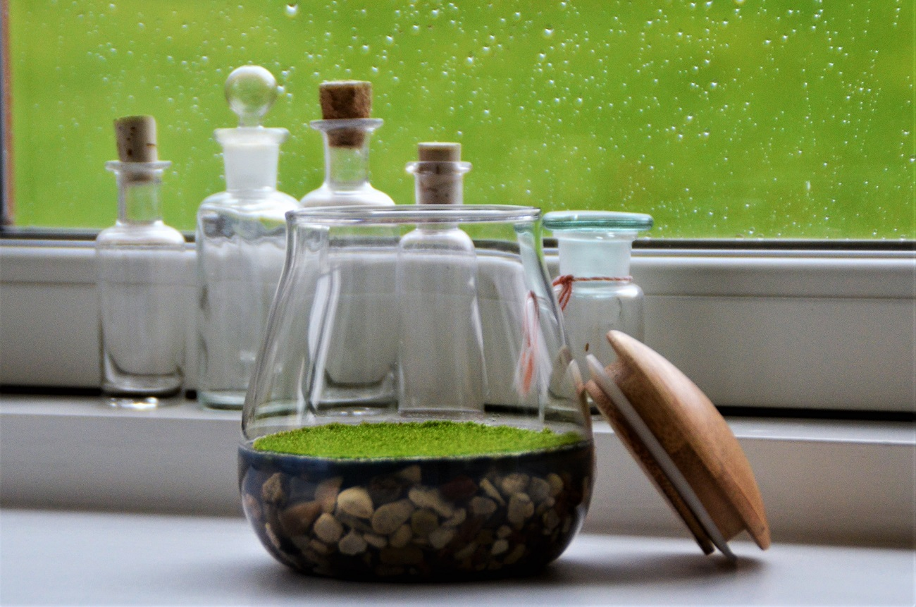 how-two-scientists-created-a-natural-air-freshener-from-moss