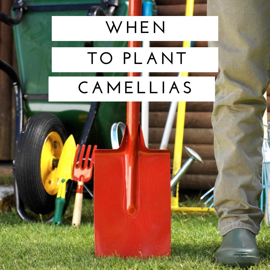 how-i-started-a-5k-month-backyard-plant-nursery-business