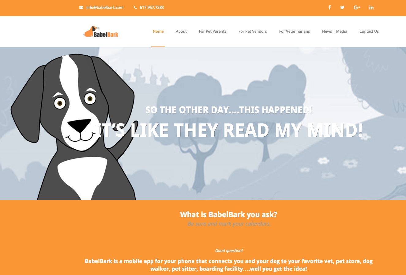 how-a-simple-idea-turned-into-a-pet-platform-with-thousands-of-users