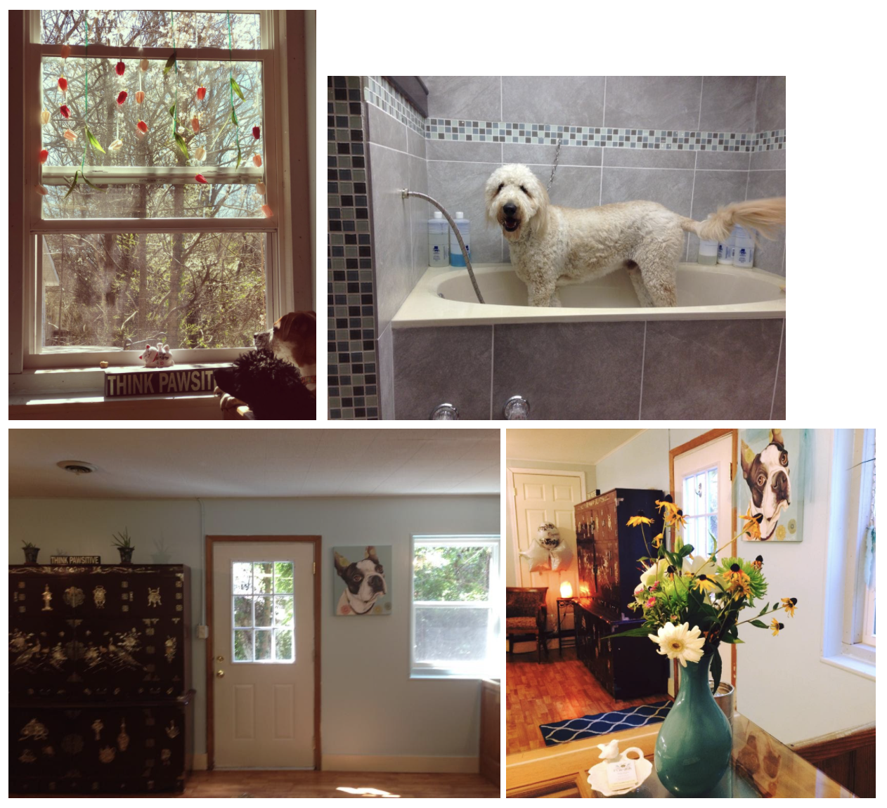 how-i-started-a-20k-month-pet-spa-that-provides-a-more-comfortable-grooming-experience